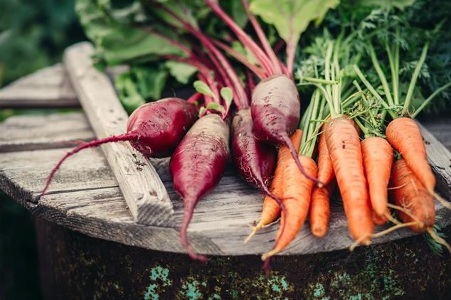 verse wortelen en bietjes